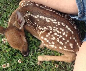 animal, deer, and bambi image