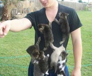 pussy magnet image