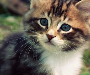 adorable, eyes, and green eyes image