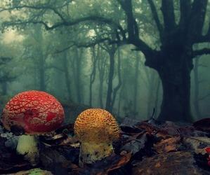 mushroom, animal, and color image
