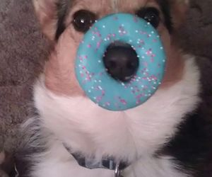 dog, donut, and cute image