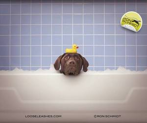 animals, pets, and bath time image