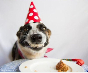 dog, birthday, and funny image