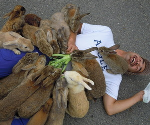 rabbit, bunny, and funny image