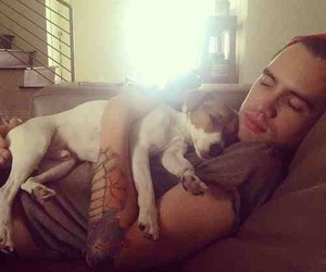 adorable, panic! at the disco, and puppy image