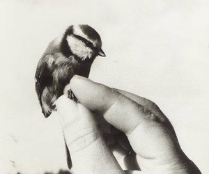 bird, hand, and black and white image