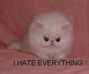 cat, i hate everyone, and funny image