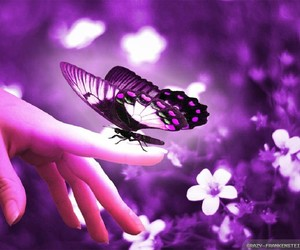 beautiful, butterfly, and nature image