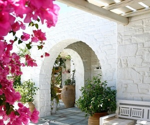 flowers, white, and Greece image