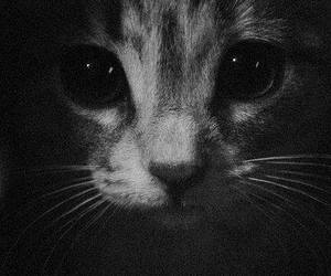 cat, black and white, and animal image