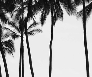 beach, outside, and palm trees image