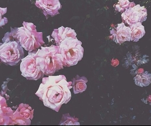 beautiful, flower, and grunge image