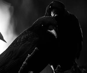 bird, animal, and black and white image