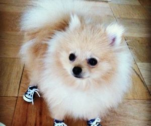 dog, cute, and shoes image