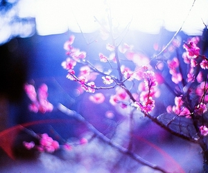 flowers, blur, and pink image