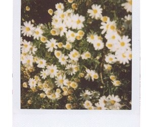 polaroid, flowers, and grunge image