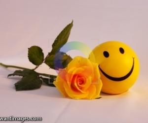 smile rose image