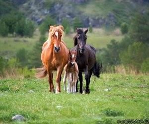 family, freedom, and horse image