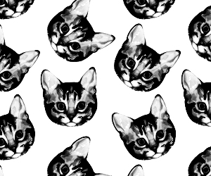 black and white, cats, and kittens image