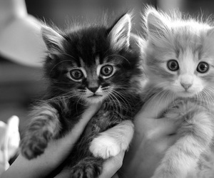beauty, black and white, and cool image
