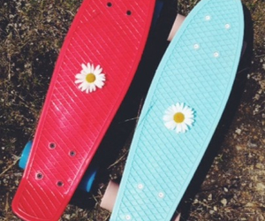 blue, board, and daisy image