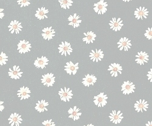 flowers, daisies, and background image