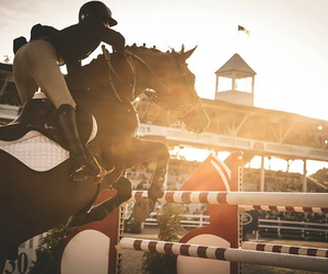 equestrian, show, and equine image