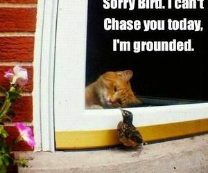 bird, cat, and funny image