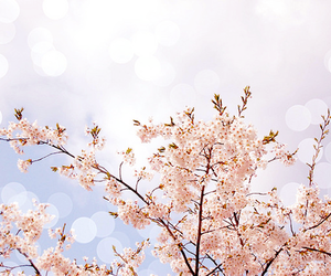 blossom, flowers, and pale image