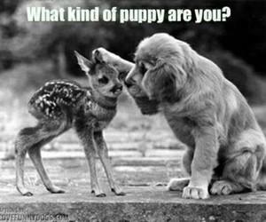 bambi, dog, and funny image