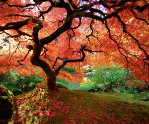 tree and beautiful image