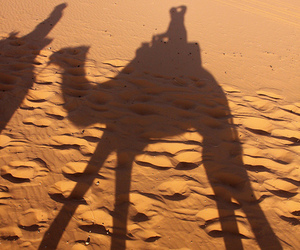 africa, camel, and camels image