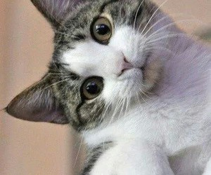 cat, cute, and hello image