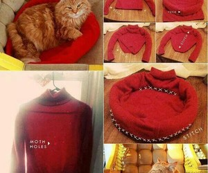 tutorial, bed, and cat image