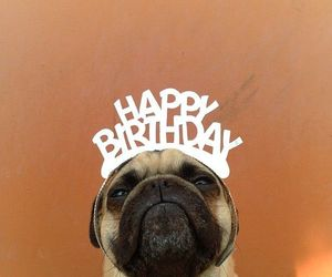 dog, happy birthday, and birthday image