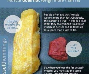 muscle, fat, and weight image