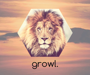 animal, growl, and lion image