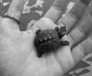 turtle, animal, and hand image