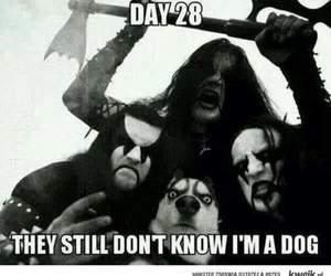 dog and funny image