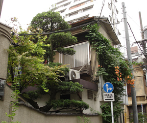 plants, house, and japan image