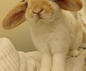 animal, bunny, and furry image