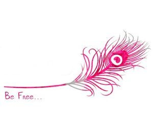 feather, pink, and free image
