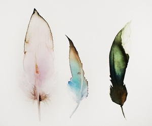 feather, art, and colors image