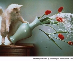 cat, cats, and water image