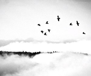 birds, black and white, and mountains image