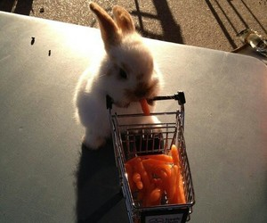 cute, carrot, and bunny image
