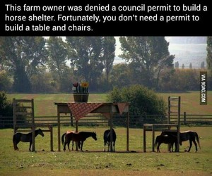 horse, table, and chair image
