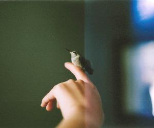 bird, girl, and love image