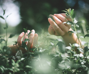nature, hands, and green image