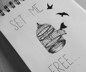 free, bird, and drawing image